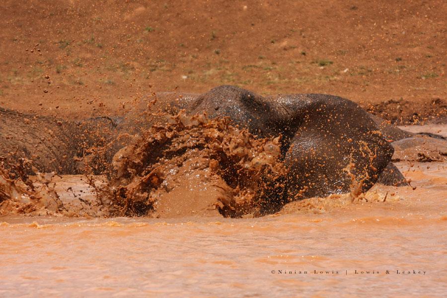 elephant05